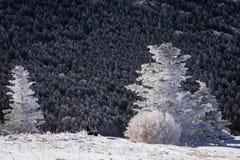 冬天阿巴拉契亚足迹远足2 免版税库存照片