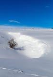 冬天随风飘飞的雪 库存照片
