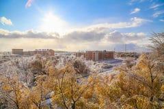 冬天雪和太阳、天空和树 免版税库存图片