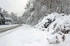 冬天雪和审阅森林的路 免版税库存照片