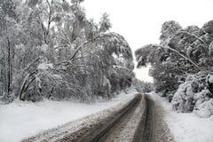 冬天雪和审阅森林的路 库存照片