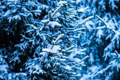冬天雪圣诞树1 免版税图库摄影
