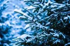 冬天雪圣诞树9 免版税库存图片