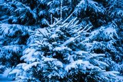 冬天雪圣诞树8 免版税库存图片