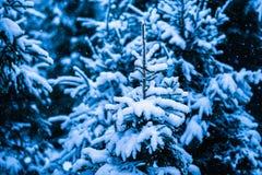 冬天雪圣诞树12 免版税库存照片