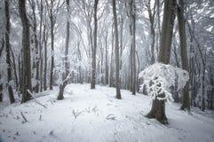 冬天雪在森林里 免版税库存照片