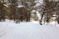 冬天雪森林在一个晴天 图库摄影