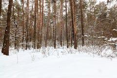 冬天雪森林在一个晴天 库存照片