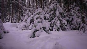 冬天雪森林大随风飘飞的雪在俄国森林、霜和多雪的天气里 影视素材