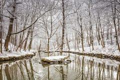 冬天雪森林 免版税库存图片