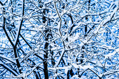 冬天雪森林11 免版税库存图片