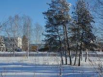 冬天雪森林 免版税库存照片