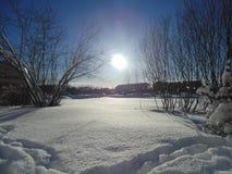 冬天雪森林 免版税图库摄影
