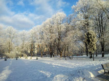 冬天雪的公园 免版税库存照片