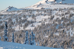 冬天雪的山森林 免版税库存图片