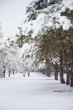 冬天雪的杉木森林,多雪的道路 库存照片
