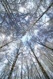 冬天雪被盖的分支树 免版税库存图片