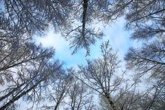 冬天雪被盖的分支树 图库摄影