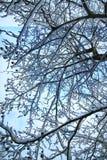 冬天雪被盖的分支树 库存图片