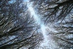 冬天雪被盖的分支树 库存照片