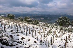 冬天雪风景在葡萄园里 免版税库存照片
