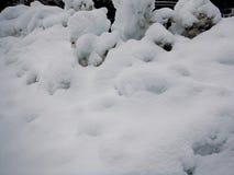 冬天雪风景纹理细节 库存照片