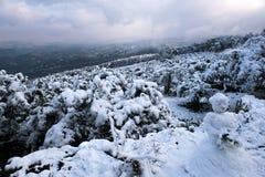 冬天雪风景 库存图片
