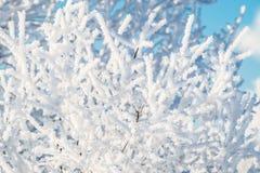 冬天雪细节 免版税库存图片