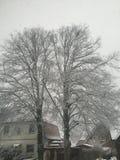 冬天雪 免版税图库摄影