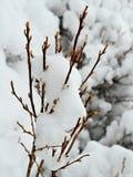 去年冬天雪 免版税库存照片
