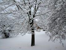 冬天雪 图库摄影