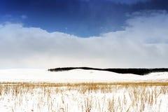 冬天雪Scape和领域 图库摄影