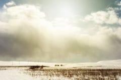 冬天雪Scape和领域 免版税库存图片