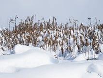 冬天零星风景 库存图片