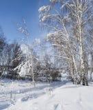 冬天零星风景 免版税库存照片