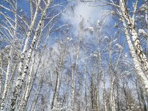 冬天零星风景 图库摄影
