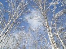 冬天零星风景 库存照片
