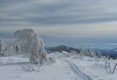 冬天霜和积雪的冷杉木在山腰 免版税图库摄影