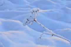 冬天霜的自然秀丽户外早晨 库存照片