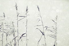 冬天霜自然背景 库存照片