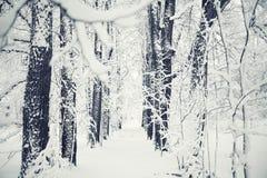 冬天霜自然背景 免版税库存照片