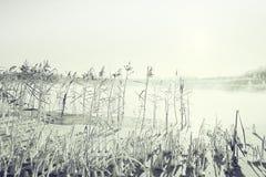 冬天霜自然背景 库存图片