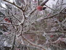 冬天霜 库存图片