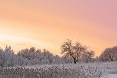 冬天领域和苹果树 免版税库存照片