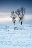 冬天领域日落 库存照片