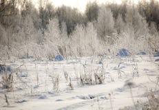 冬天领域 库存照片