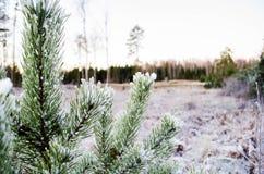 冬天颜色的秀丽 Otanki,拉脱维亚 库存照片