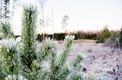冬天颜色的秀丽 Otanki,拉脱维亚 免版税图库摄影