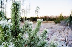 冬天颜色的秀丽 Otanki,拉脱维亚 免版税库存图片