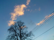 冬天颜色,树篱末端,英国 免版税图库摄影